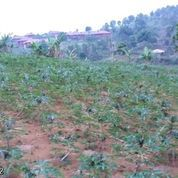 Tanah Di Gunung Geulis Kabupaten Bogor