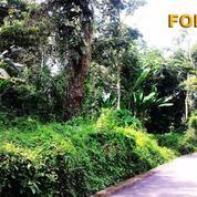 Di Tanah 13 Are Untuk Villa Di Singakerta Ubud