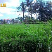 Di Tanah 16 Are Untuk Villa Di Singakerta Ubud