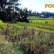 Di Tanah 26 Are Untuk Villa Di Singakerta Ubud