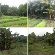 Tanah Kebun Luas 8500M2