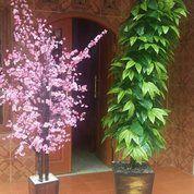 Pohon Hias D Bandung
