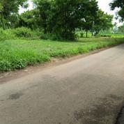 Tanah Kalisat Rembang Pasuruan UNTUK Perumaha NOL Jalan Raya Harga Permeter