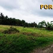 Tanah 14,8 Are Untuk Villa Di Jl. Bottle Tabanan Bali