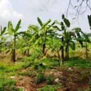 Tanah Di Jalan Setu Serang Cibening Setu Bekasi