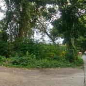 Tanah CIAMIIK Desa Suru Mojokerto Untuk Perumahan Harga MURAAH Puool