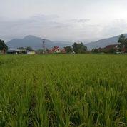 Tanah/Lahan Potensial Zona Kuning 220tumbak Cimaung Bandung Selatan