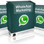 Panduan Strategi Menambah Omzet Dengan Whatsapp Marketing