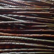 Bambu Cendani Sisik Naga
