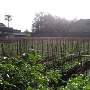 Tanah Pinggir Jalan Parakansaat Antapani Bandung 3185 M2
