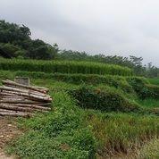 Tanah Luas Cocok Untuk Peternakan