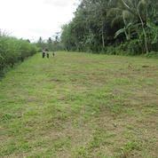 Tanah Kavling Murah Malang Pakisaji