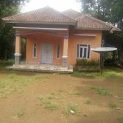 Rumah Dan Kebun Cengkeh 461 M2 Di Pedesaan Bojong Purwakarta