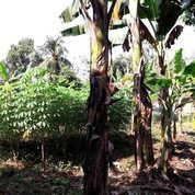 Tanah Siap Bangun 2451 Meter Di Bantar Gebang Bekasi