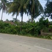Sawah Di Pinggir Jalan Provinsi Di Pabuaran, Serang, Banten