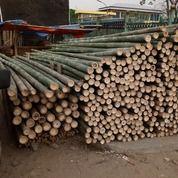Bambu Untuk Proyek - UD. Citra Gemilang