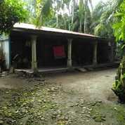 Lahan Sawit Beserta Rumah Dan Tanah Di Kutalimbaru/Deli Serdang