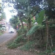 Tanah Kebun Teh Murah Pinggir Jalan Bojong Purwakarta Jawa Barat