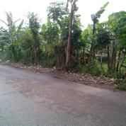 Tanah Seluas 5.550 M2 Di Pamulang