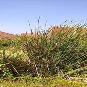 Tanah Di Taman Penjariangan Sari Dengan Lokasi Strategis Cocok Untuk Membangun Rumah Impian