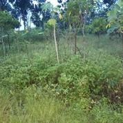 Tanah Karangan Jaya Surabaya