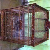 Kurungan Burung Ex. Cucak Rowo