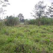 Tanah Strategis Pinggir Jalan Cibatok Cibungbulang Ciampea Bogor