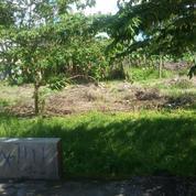 Tanah Bagus Di Kotagede Jogjakarta(KODE F.1654)