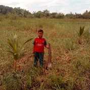 Tanah Pinang Seribu