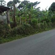 Kavling Cijeruk Palasari Bogor (Ukuran 15.000 M2)