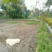 Tanah Sawah Pinggir Jln Aspal