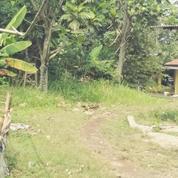Tanah Untuk Investasi Jalan Diklat Pemda Bojong Nangka Kelapa Dua Tangerang