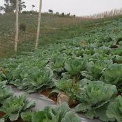 Tanah Di Cianjur Selatan Bisa Buat Perkebunan Atau Peternakan