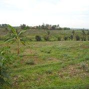 Tanah Strategis Lokasi Dekat Jalan Utama Cariu Jonggol Bogor