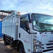 Isuzu Elf NMR 71 Model 6 Ban Truck CDD Tahun 2019 ( Unit Baru )