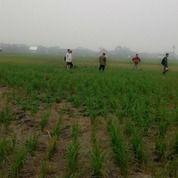 Tanah 800mtr Persegi, Dari Perumahan Duta Bandara -/+ 500meter, Jl. P. Sembin