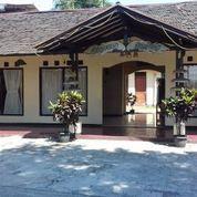 Hotel Tua Sangat Murah Lokasi Strategis Di Raya Utama Ciawi, Bogor