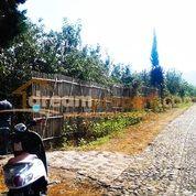 DREAMPROPERTI | Kebun Produktif Desa Bulukerto Batu
