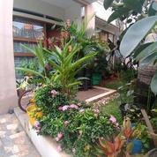 Rumah Bagus Dan Terawat Dijaticempaka Jatiwaringin Pondok Gede Bekasi