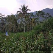 Tanah 1hektare View Istimewa Kemiri Jabung Malang