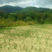 Tanah Hak Milik Di Samosir