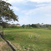 Tanah View Sawah Pinggir Jalan Raya Di Pererenan Canggu