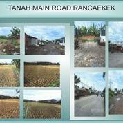 Tanah Mainroad Rancaekek