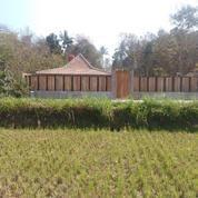 Villa Dekat Kawasan Wisata Kasongan Dengan View Sawah Dan Bukit Yogyakarta
