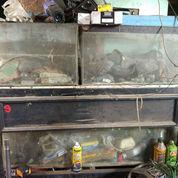Aquarium Akuarium Nego Saja Gan