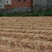 Tanah Murah Di Joyo Agung Merjosari Malang