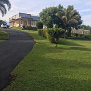 Villa Cantik Ada Kolam Renangnya. Di Gunung Gelis Ciawi Bogor. Jawa Barat.