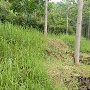 Tanah Shm Murah Di Wonoagung Kasembon Malang