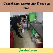 Jasa Basmi Semut Dan Kecoa Di Bali