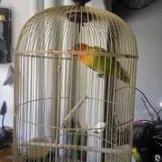 Burung Dan Kandangnya